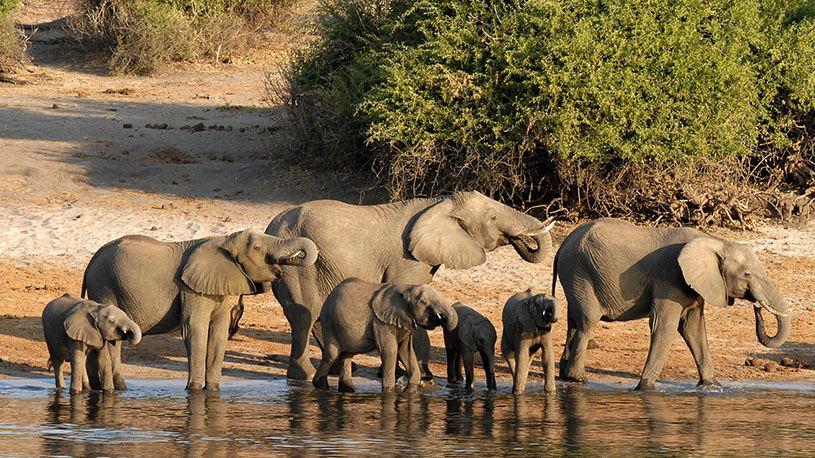 Tips for an African Safari | Mowgli Expeditions